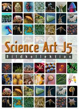 Science Art – J5 (16x Insekten)